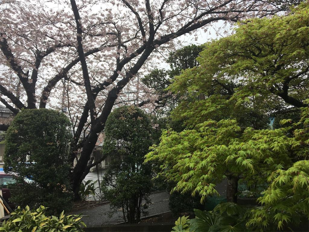 天気 お花見 雨 家の隣