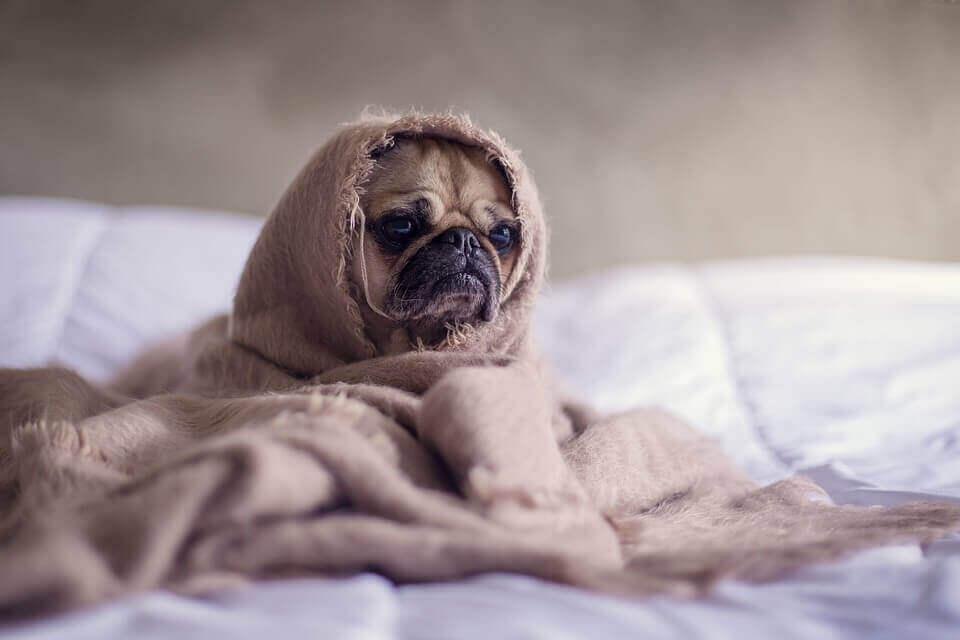 布団 毛布 使い方 違い